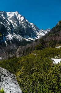 Tatra gebergte Slowakije van