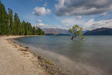 De beroemde Wanaka boom op het Wanaka meer in Nieuw Zeeland van Anges van der Logt