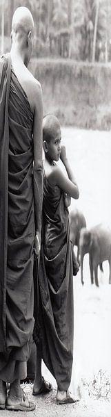 Panel 2 eines Diptychons Mönche beobachten, wie junge Elefanten gewaschen werden von Affect Fotografie
