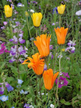 Oranje veldbloemen von Lotte Veldt