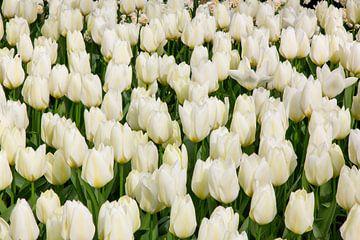 Tulpen 2 van Ben van Boom