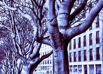 Die Bäume haben ein Auge auf uns von Steve Van Hoyweghen
