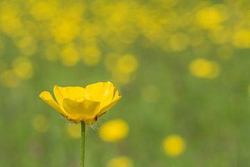 geel bloemke von Jan Heijmans