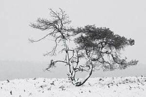 Grove den tijdens een sneeuwbui in de winter in Nederland.