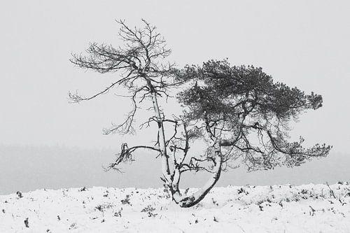 Grove den tijdens een sneeuwbui in de winter in Nederland. van