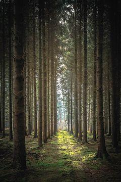 bos van Christophe Van walleghem