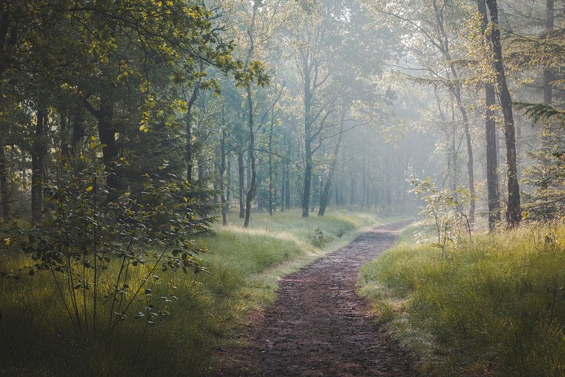 Ochtend boswandeling in de Oisterwijkse Bossen en Vennen van Peter Nolten