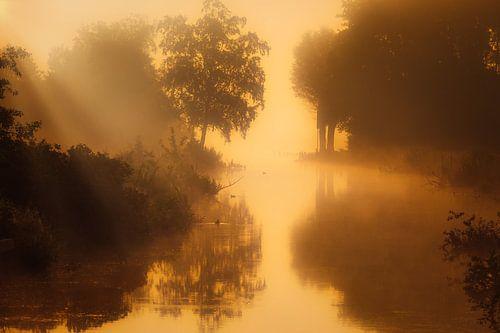 Een mistige landschap bij het Zuidlaardermeer in Drenthe