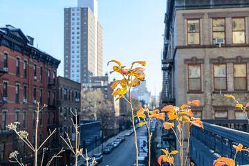 Highline New York van Lisa Stelzel