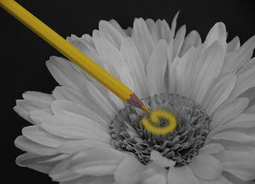Gelb von Tesstbeeld Fotografie