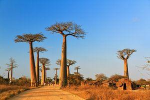 Madagaskar Baobab dorp van