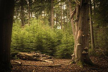 Gevallen boom van Geert-Jan Timmermans