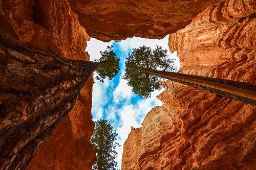 De bomen van Bryce Canyon van Ton Kool