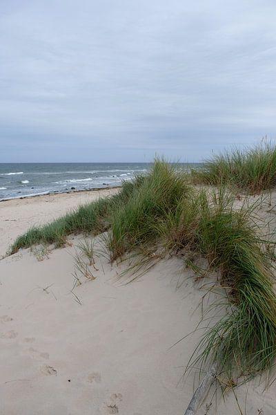 Mitte September von Ostsee Bilder