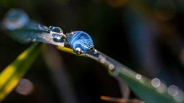 Macro-opname van een waterdruppel op een groen blad van Thomas Heitz