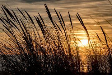 Zonsondergang aan de duinen van Danny de Jong