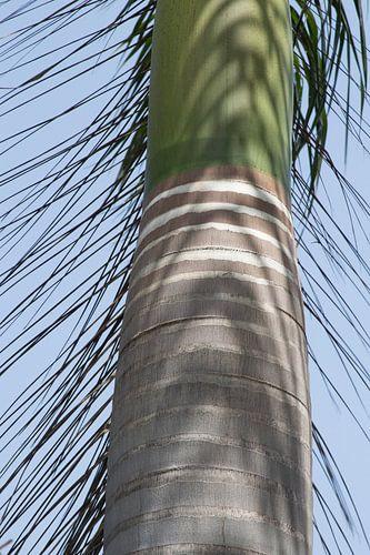 Stam van een palmboom in India van