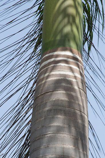 Stam van een palmboom in India