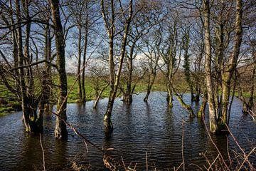 Überflutete Bäume von Bo Scheeringa Photography