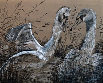 Schwäne (Federzeichnung) von Therese Brals