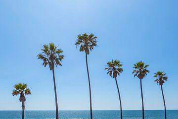 Palmbomen bij de zee van Melanie Viola