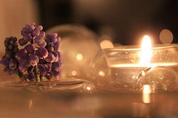 paarse bloemen in kaars licht sur Sanne Willemsen