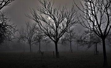 Nebel am Morgen von Tony Van de Velde