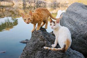 Zwei Kätzchen an einem See in Griechenland von Katho Menden