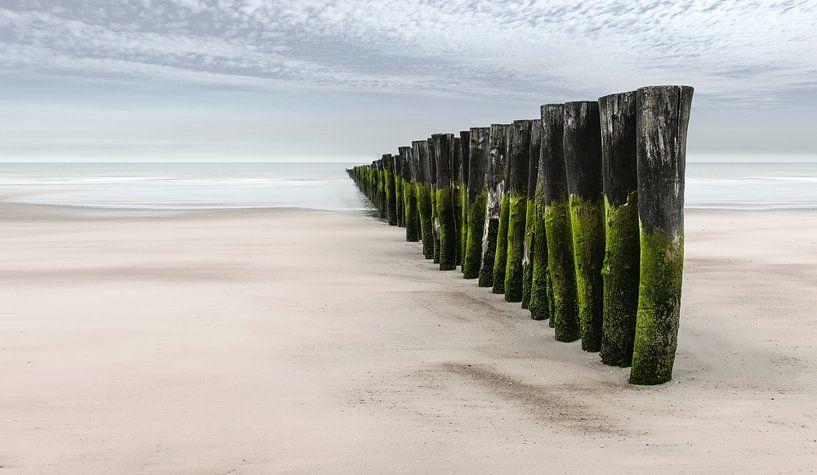 2042 Green wood van Adrien Hendrickx