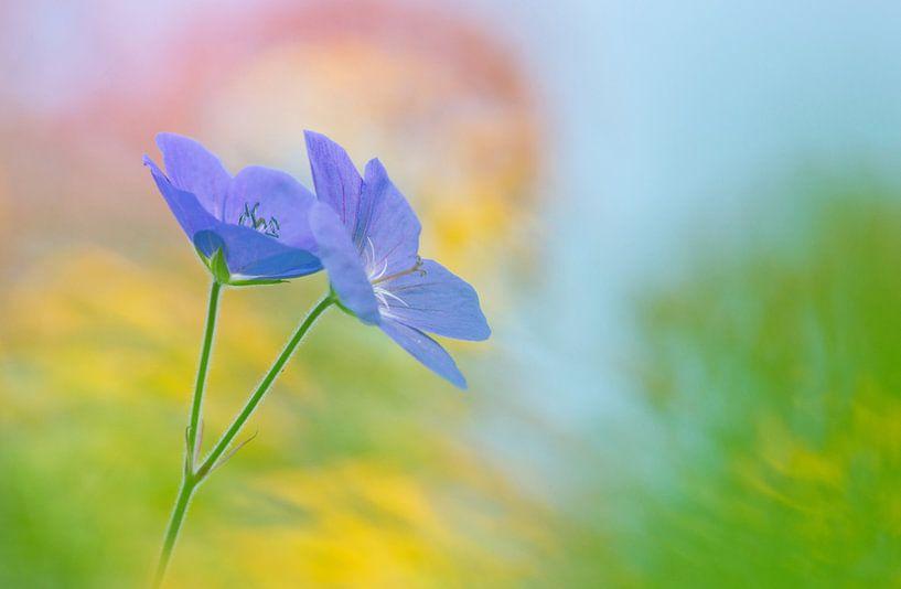 Paarse geranium ( bloem, schilderachtig en kleurrijk) van Cocky Anderson