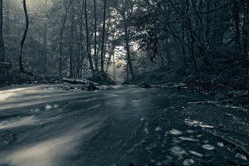 Herfst in het bos... van Jacqueline Lemmens