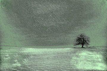 Een boom van Claudia Evans