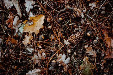 Herbst-Bild von Julie Roothooft