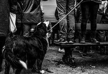 Geduldiger Hund von Tim Briers