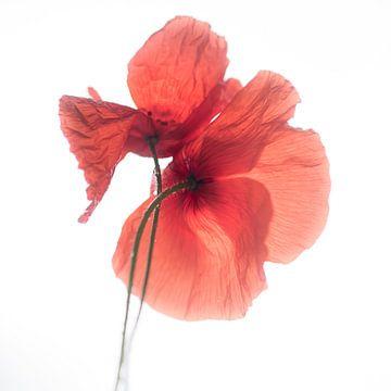 Poppy love van Christl Deckx