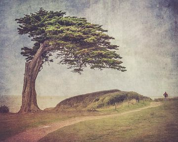 Der Mensch und der Baum von Patrick Reinquin