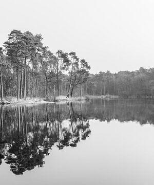 Stille in der Natur, um für eine Weile wegzuträumen von Alice's Pictures