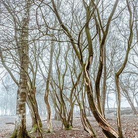 Dansende bomen van Anne Reitsma