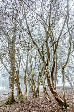Dansende bomen von Anne Reitsma
