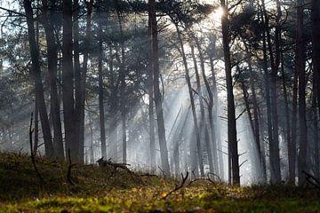 Le ciel s'ouvre et illumine la forêt sur Michel Geluk