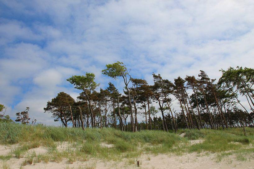 Am Westsrand von Ostsee Bilder