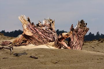 Ein Baumstumpf von Gerard de Zwaan