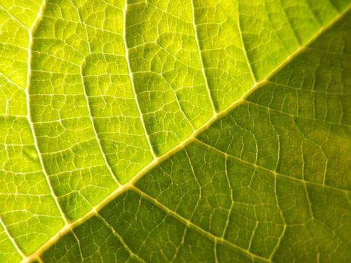 bladnerven in groen