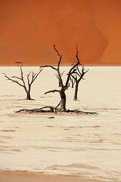 NAMIBIA ... Deadvlei II von Meleah Fotografie