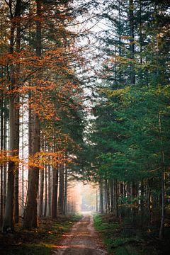 Herbst Dualität von Wahid Fayumzadah
