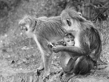 Baby Affe von Alyssa Alsemgeest