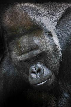 Porträt eines weißen, kräftigen männlichen Gorillas, eine schmutzige, nachdenkliche Nahaufnahme von Michael Semenov