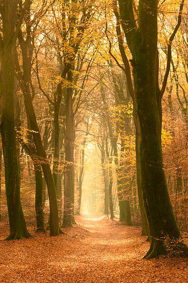 Pad door een Beuken bos tijdens een mooie mistige herfstdag. van Sjoerd van der Wal