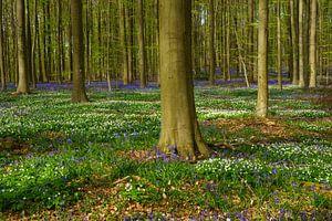 Lente in het bos