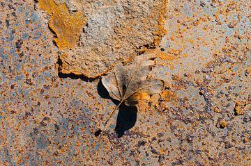 Rusty Leaves VII van LYSVIK PHOTOS